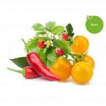 Click and GrowClick and Grow Smart Garden Refill 9-pack Frukt och grönsaksmix