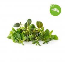 Click and GrowClick and Grow Smart Garden Refill 9-pack Italienska örter