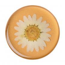 PopSocketsPOPSOCKETS Pressed Flower White Daisy Avtagbart Grip