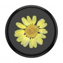 PopSocketsPOPSOCKETS Pressed Flower Yellow Daisy Avtagbart Grip